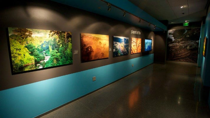 """Planet of Life"" from ""LIFE: A Journey Through Time"" at Annenberg Space for Photography"